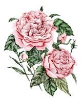 Roses are Red I Framed Print