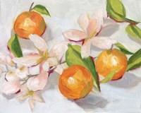 Tangerine Blossoms II Framed Print