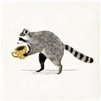 Rascally Raccoon III Fine Art Print
