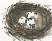 Nesting Eggs I Fine Art Print