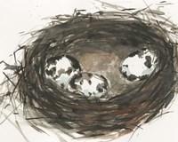 Nesting Eggs II Fine Art Print