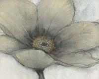 Single Cream Bloom II Framed Print