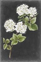Dramatic White Flowers II Fine Art Print