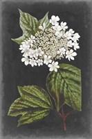 Dramatic White Flowers III Fine Art Print