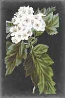 Dramatic White Flowers IV Fine Art Print