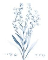 Antique Botanical in Blue I Fine Art Print