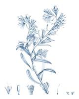 Antique Botanical in Blue II Fine Art Print