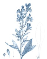 Antique Botanical in Blue III Fine Art Print