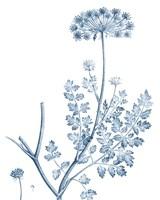 Antique Botanical in Blue V Fine Art Print