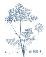 Antique Botanical in Blue VI Fine Art Print