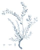 Antique Botanical in Blue VII Fine Art Print