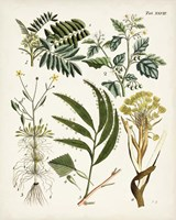 Fanciful Ferns I Fine Art Print