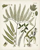 Fanciful Ferns III Fine Art Print