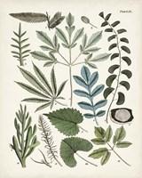 Fanciful Ferns VII Fine Art Print