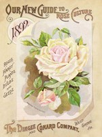 Antique Seed Packets IX Fine Art Print