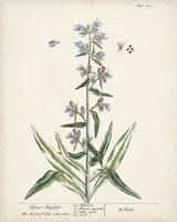 Antique Herbs II Fine Art Print