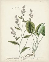 Antique Herbs V Fine Art Print