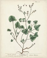 Antique Herbs VIII Fine Art Print