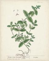 Antique Herbs IX Framed Print