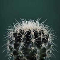 Cacti II Framed Print