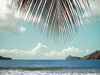 Palm Seashore Framed Print