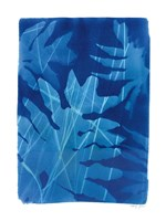 Cyanotype Tropical V Framed Print