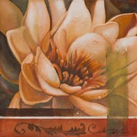 Flor de Loto II Framed Print