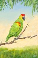Tropic Bird in Paradise II Fine Art Print