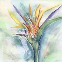 Bird of Paradise I Fine Art Print