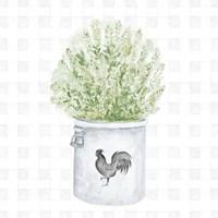 Farm Herbs II Framed Print
