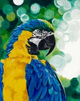 Brilliant Parrot Fine Art Print