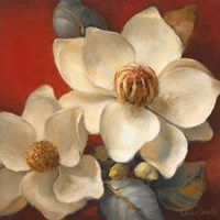 Magnolia Passion II Framed Print