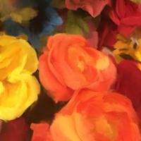 Rose Blooms Fine Art Print