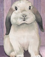 Bunny I Framed Print