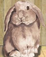 Bunny II Framed Print