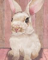 Bunny III Framed Print