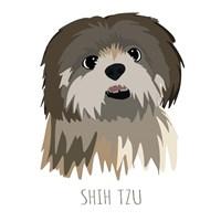Shih Tzu Fine Art Print