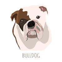 Bull Dog Fine Art Print