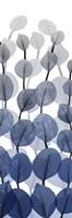 Sapphire Blooms On White 2 Framed Print