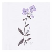 Lavender Wildflowers II Framed Print
