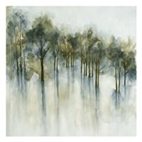 Forest Glen Fine Art Print