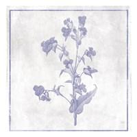 Monochrome Floral Lavender 1 Framed Print