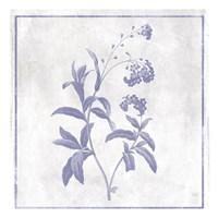 Monochrome Floral Lavender 2 Framed Print
