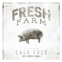 Fresh Pig Framed Print