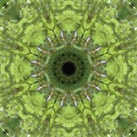 Colorful Kaleidoscope 11 Fine Art Print