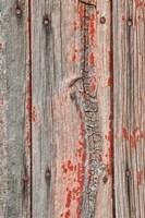 Close-up of Knot Hole Fine Art Print