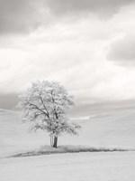 Infrared of Lone Tree in Wheat Field 1 Fine Art Print