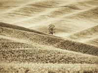 Infrared of Lone Tree in Wheat Field 2 Fine Art Print