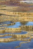 Mineral Deposit Formation, Yellowstone National Park Fine Art Print