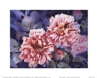 "Pink Peonies by Janet Whittle - 10"" x 8"" - $10.49"